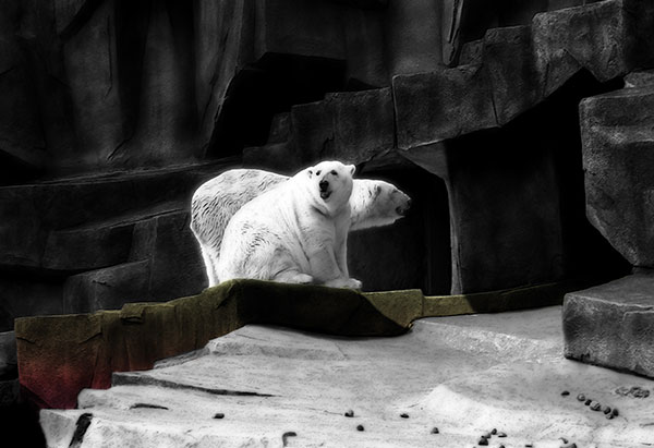 Image of Light Painting Bipolar Bears