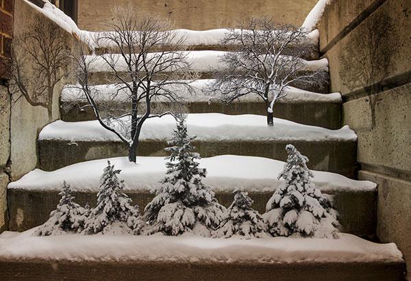 Image of Light Painting Bonsai Winter
