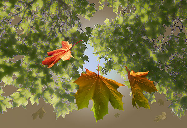 Image of Light Painting Falling Leaves