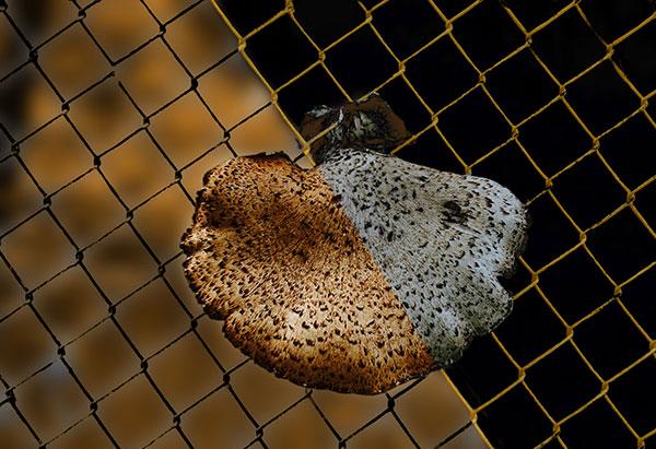 Image of Light Painting Fungus Among Us