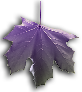 Image of Purple Falling Leaf