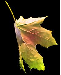 Image of MultiColor Falling Leaf