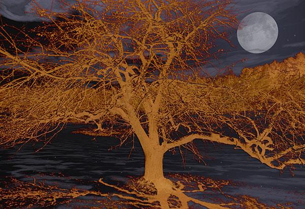Image of Light Painting Moonshine