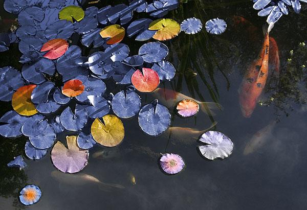 Image of Light Painting Pondering Fish