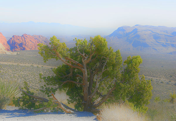 Image of Light Painting Red Rock Canyon Tree