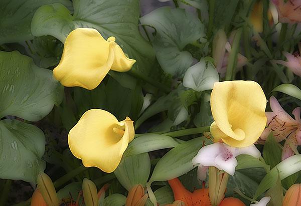 Image of Light Painting Three Lillies